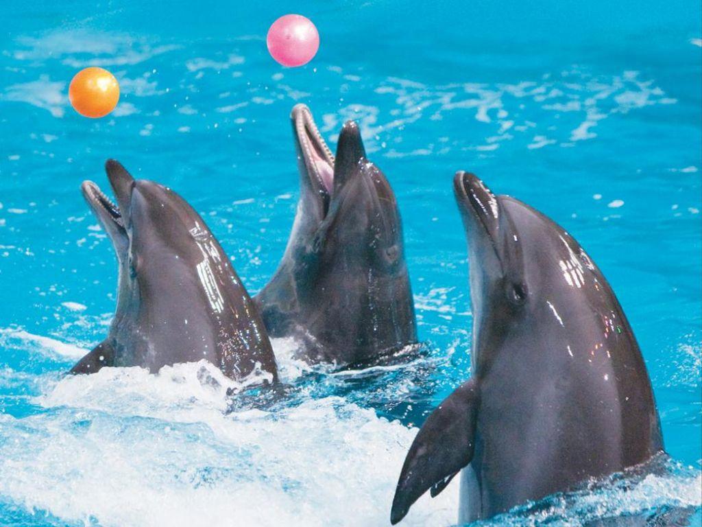 дельфинарий канкун