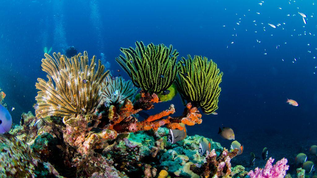 риф канкун