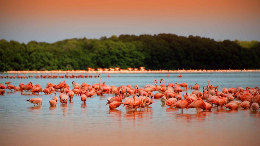 рио-лагартос фламинго